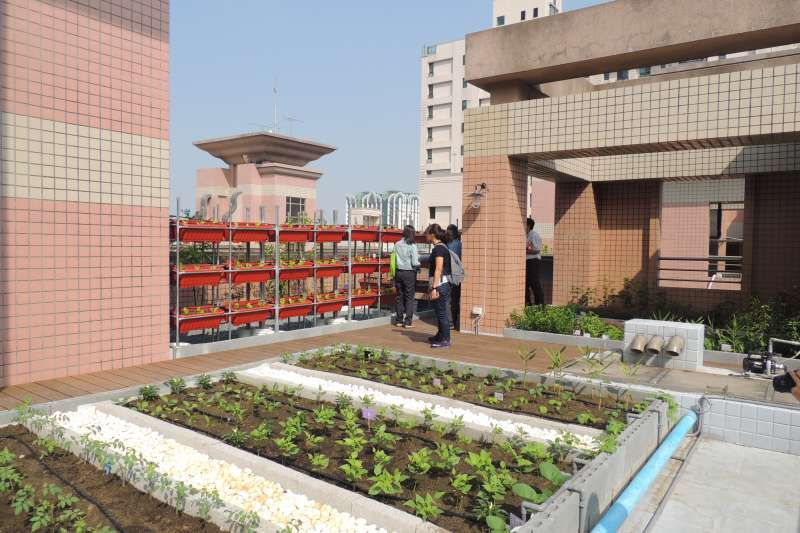 105年圓舞曲大樓C棟屋頂綠化。(圖/徐炳文攝)