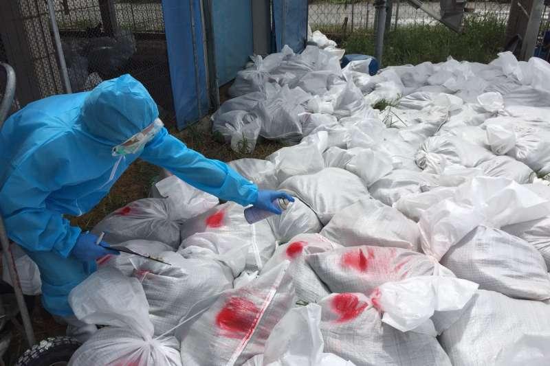 彰化縣大城鄉1土雞場確診為H5N2亞型高病原性禽流感,4日防疫人員進行全面撲殺,並消毒場區環境。(圖/彰化縣政府提供)