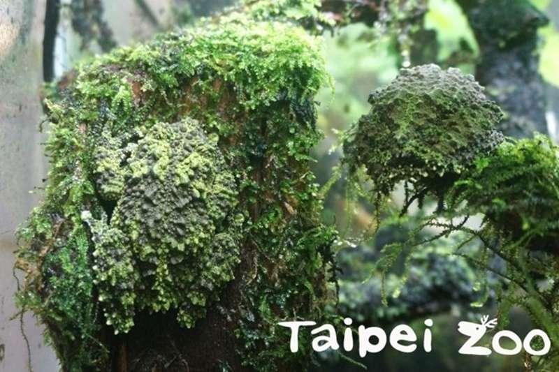你看得出這張圖有幾隻蛙嗎?(圖/取自台北市立動物園臉書)