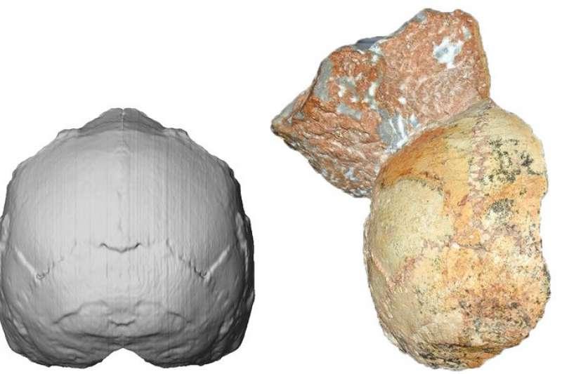 1970年代在希臘南部阿比笛瑪洞穴的角礫岩堆中,發現的頭骨化石,屬於21萬年前的史前人類。左為重建圖、右為遺骨。(AP)