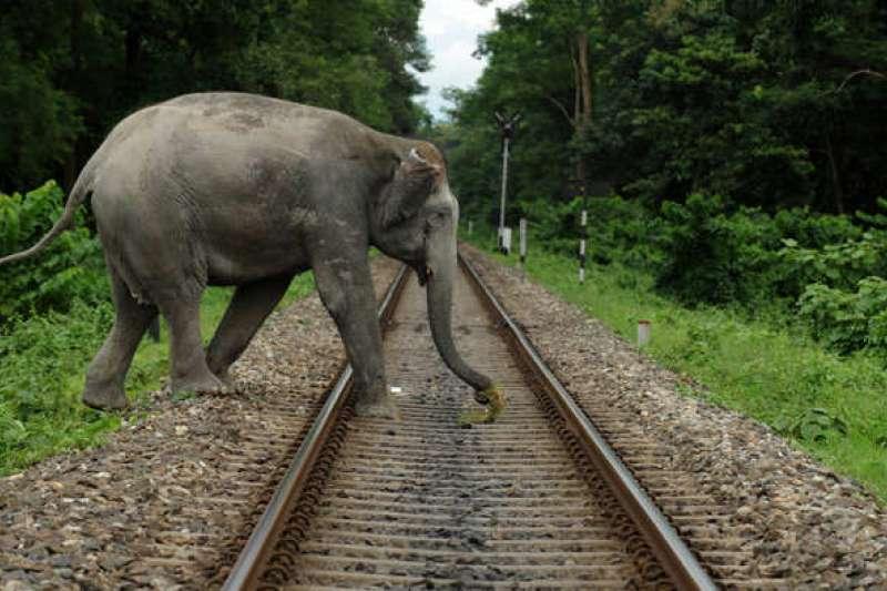 印度東北邊境常有大象闖上鐵路。(Rikki's Refuge@flickr/CC BY 2.0)