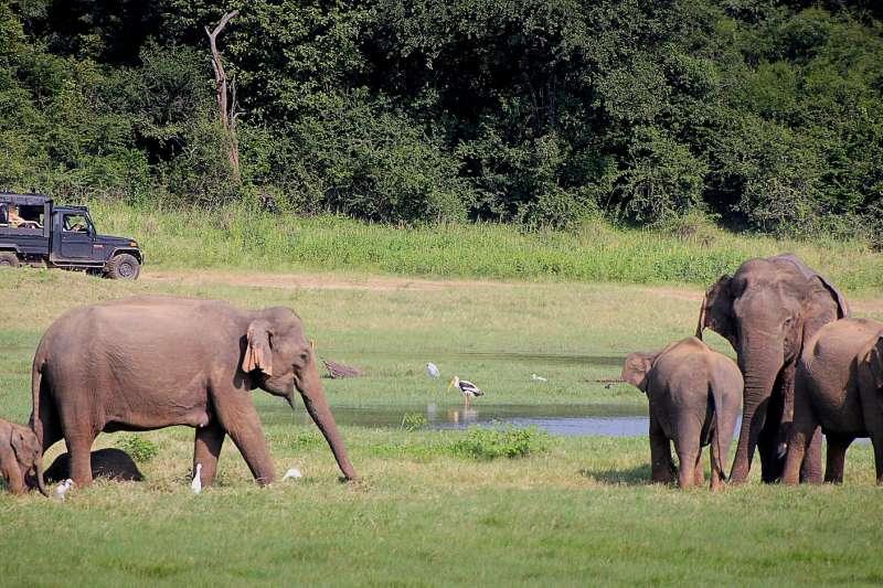 印度東北部阿薩姆森林是大象的主要棲息地。(GregMontani@pixabay)