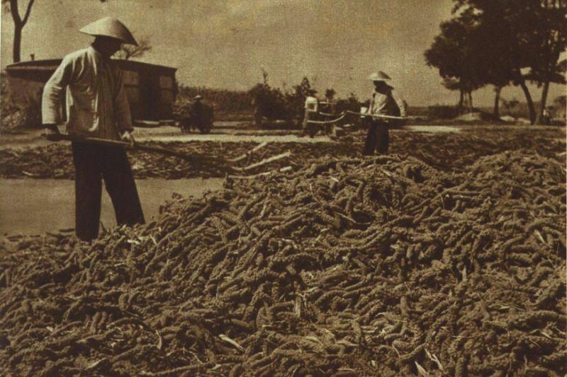 作者提及,中國工、農生活很困苦,因為中國的戶口制度始終把他們列為二等公民,但是情況現在確實慢慢在改善。(取自維基百科)