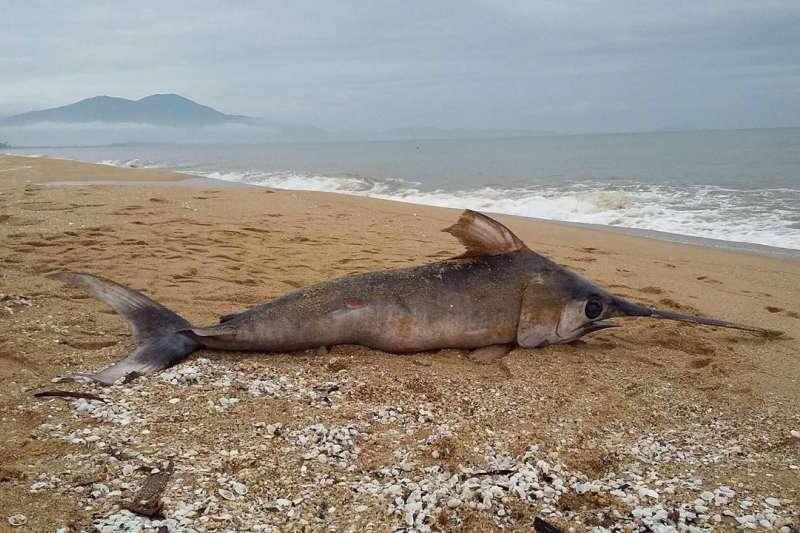 2016上半年,越南中部海岸大量魚類死亡。圖為2016年10月廣平省海岸出現的死魚。(彭保羅提供)