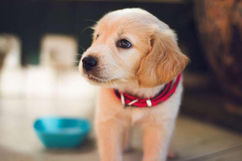山西太原今天實施被譽為「最嚴養狗令」法規,包括牽繩不能超過1.2公尺;其他多地也推出限制,包括不准虐狗、遺棄。(圖/取自unsplash)