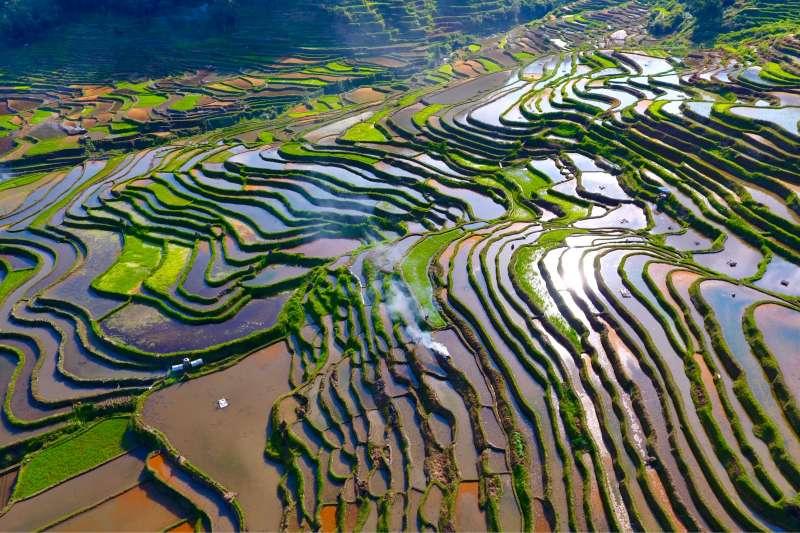 這是廣西融水苗族自治縣杆洞鄉杆洞村的梯田。(新華社)