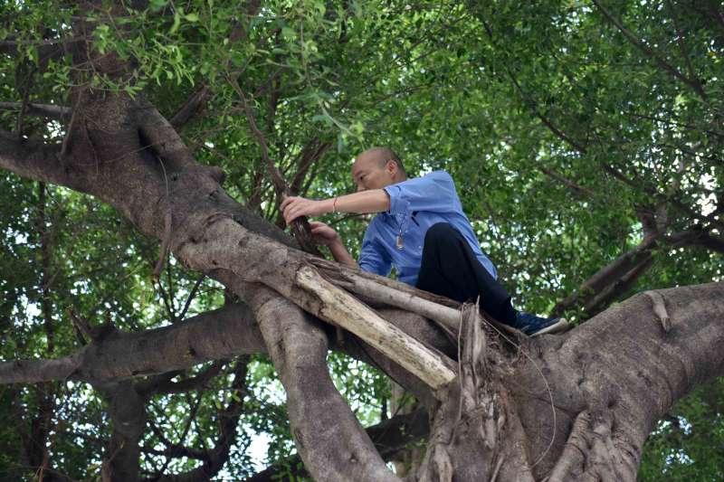 韓國瑜24日到前鎮區視察登革熱噴藥作業,還爬上樹檢查樹洞的狀況。(高雄市政府提供)