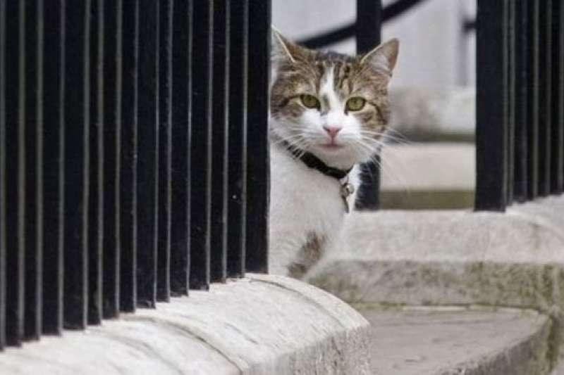 首相府「捕鼠大臣拉里」。(BBC中文網)