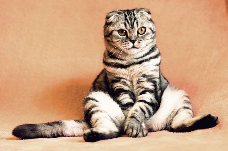 高齡79歲的美國婦人塞古拉因違反當地「禁止餵貓」的法令被判處10天監禁,將在8月11日入監服刑。(此為示意圖/pixabay)
