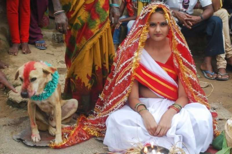 在印度,人和動物是可以結婚的,而他們的婚禮也辦得與一般婚禮一樣隆重。(圖片擷取自Youtube)