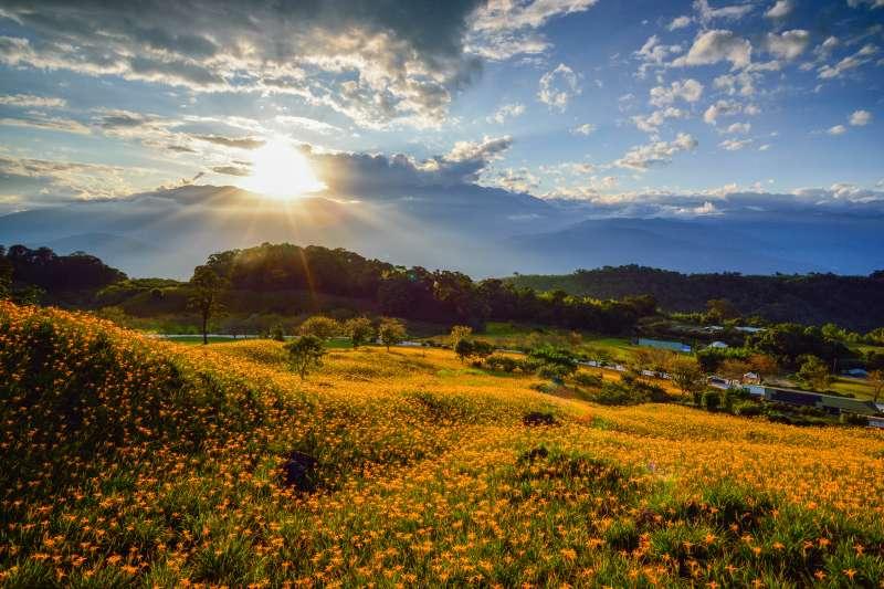 花蓮玉里赤科山金針花季美景;赤科山的金針花田散落的地域極廣,遊客可跟著花,讓足跡遍行更多景點。(周律任攝)