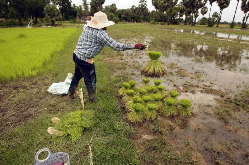 全球暖化、氣候變遷正嚴重衝擊人類的土地利用、糧食生產(AP)