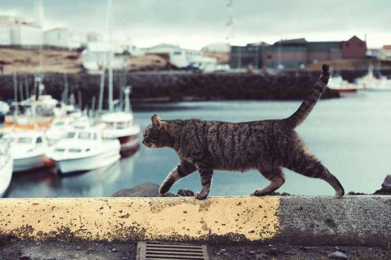 2019年英國年度貓咪大獎上,許多深藏感人故事的貓咪獲提名(圖/Unsplash)