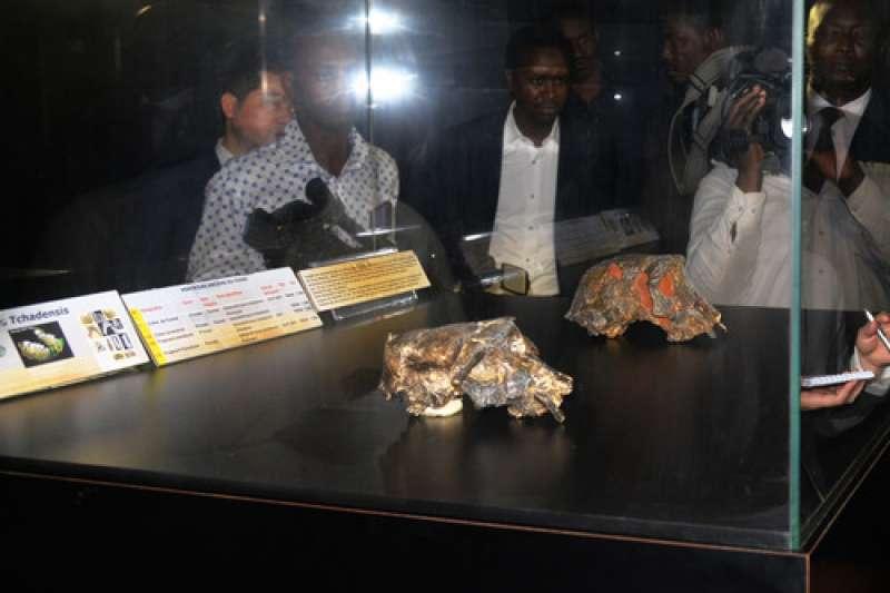 查德國家博物館展出的圖邁頭骨複製品。(新華社)
