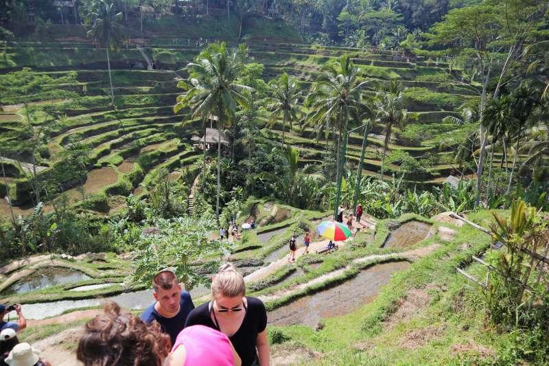 峇里島「德哥拉朗梯田」在旅遊旺季每天有約3000名遊客參觀。(蔡娪嫣攝)