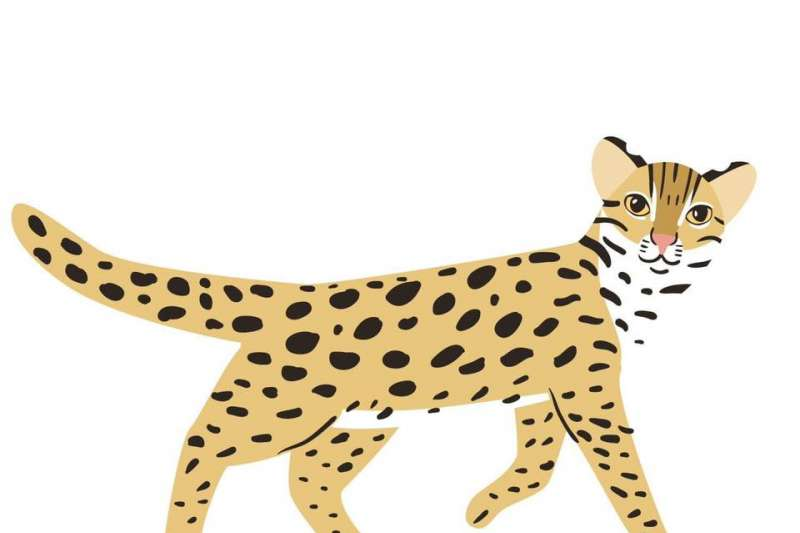俄羅斯設計師Катя Молодцова免費繪製送給台灣的石虎圖案。(Катя提供)