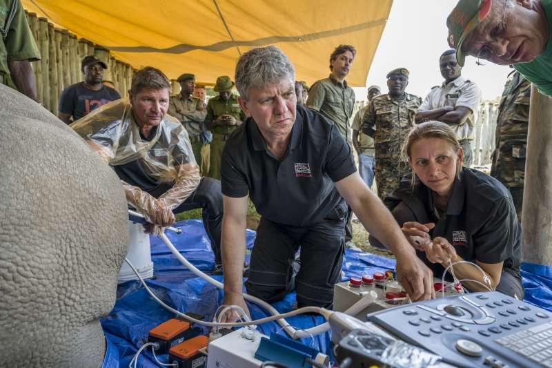 研究團隊於東非肯亞的奧佩傑塔自然保護區執行該任務。(AP)