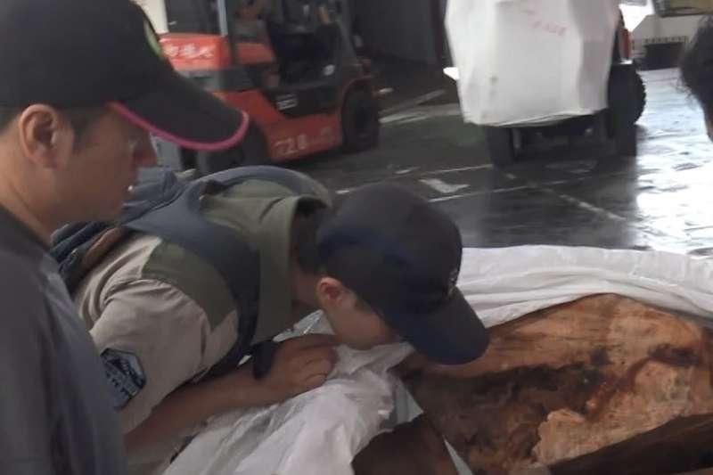 20190829-調查局28日動員新北市調查處等13個外勤處站及百餘名調查人員,同步於北、中、南、東等地查緝破壞國土保育案件,搜索業者營業處所16處,並約談犯罪嫌疑人40人。圖為樟木案。(調查局提供)