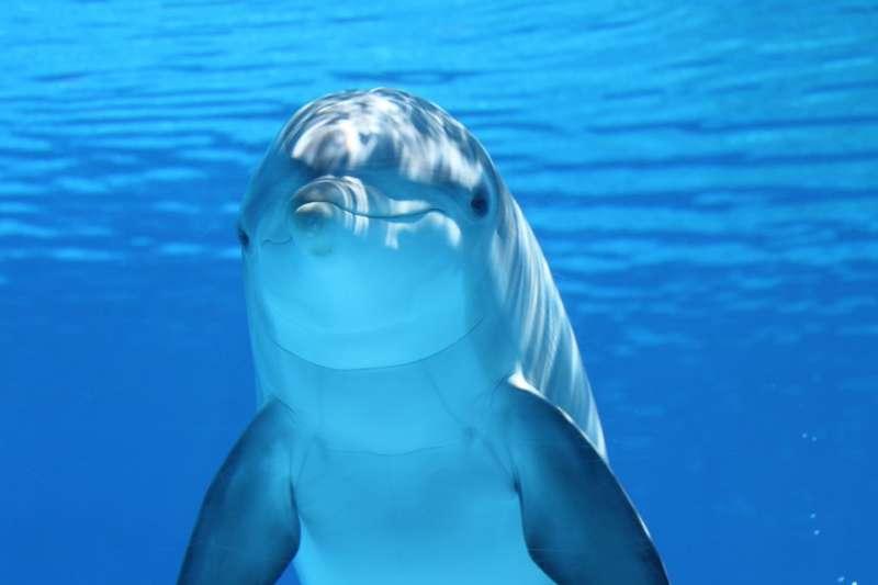 如果講到性,外表可愛的海豚可以說是一種變態的生物。(圖片取自Pixabay)