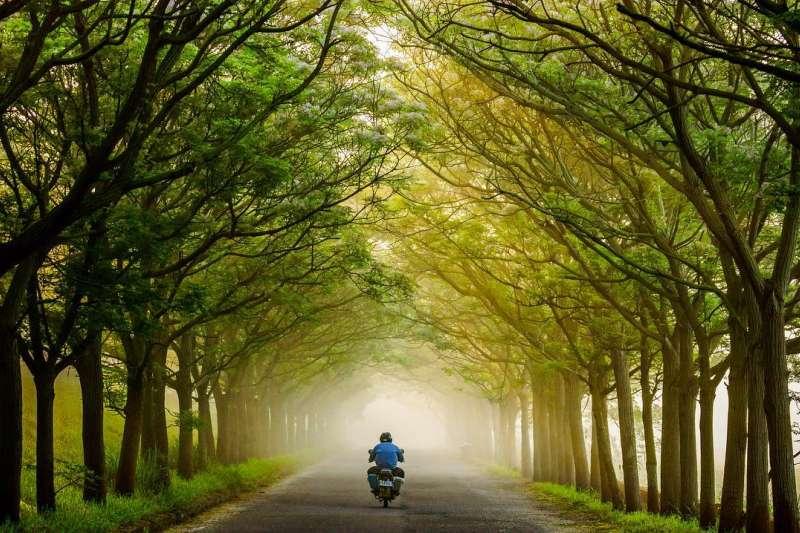 嘉義縣六腳鄉的苦楝花隧道擁有迷人綠蔭,常吸引旅客駐足(圖/台灣旅行小幫手)