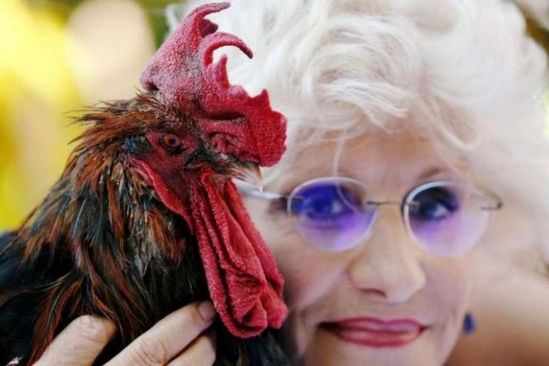 法國公雞莫里斯(Maurice the cockerel)和主人科琳(BBC)