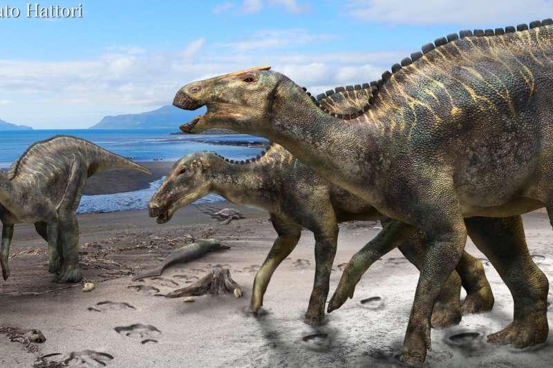 日本新發現的恐龍「神威龍」(Kamuysaurus japonicus)(北海道大學)