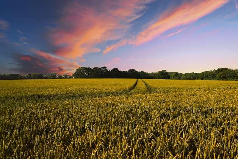 農田、農地、務農示意圖。(pixabay)