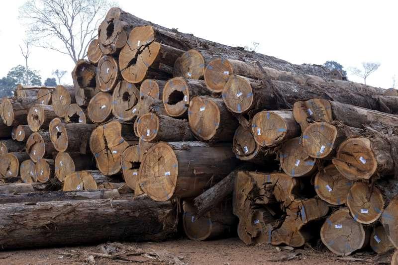 亞馬遜雨林大火:巴西政府鼓勵火耕,導致山老鼠盜砍林木情況猖獗(AP)