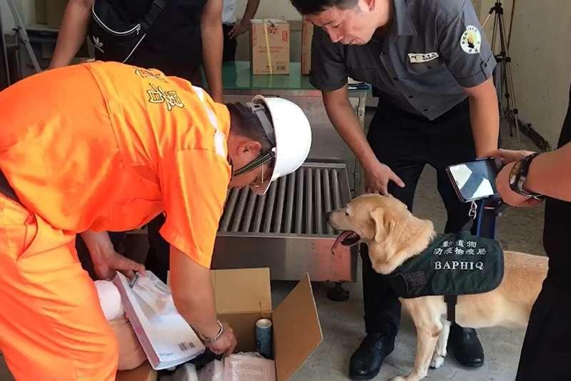 20190911-檢疫犬於金門支援海巡署人員安檢作業。(海巡署提供)