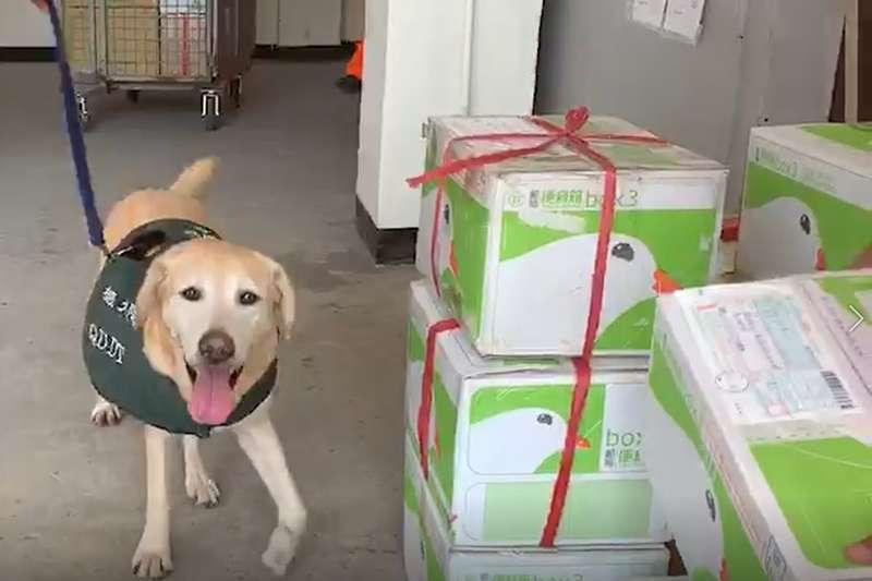 檢疫犬於金門支援海巡署人員安檢作業。(海巡署提供)