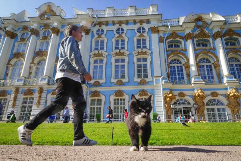 俄羅斯凱薩琳宮外的旅人與一隻黑貓。(美聯社)
