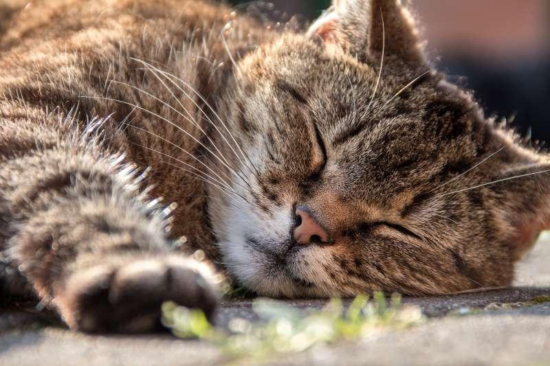(示意圖)最新研究指出,午睡降低罹患心血管疾病風險。(Pixabay)