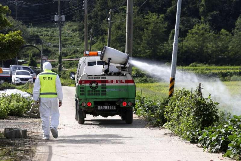 南韓17日宣布出現首例非洲豬瘟疫情,隨即在京畿道坡州市進行消毒與撲殺作業。(美聯社)
