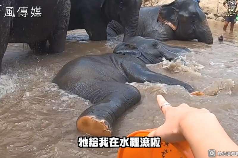 和大象親密戲水堪稱潑水節!快樂遊玩還能同時救大象,遊客比基尼零距離共浴值回票價