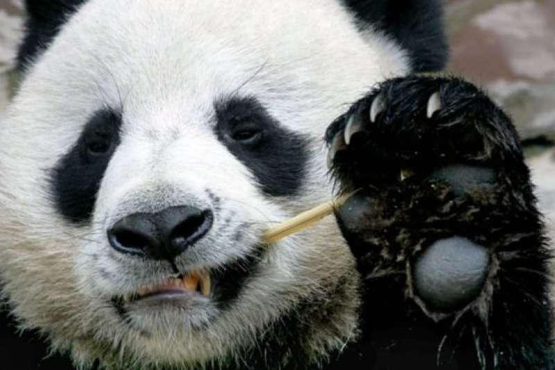 「創創」今年8月剛滿19歲。(BBC中文網)