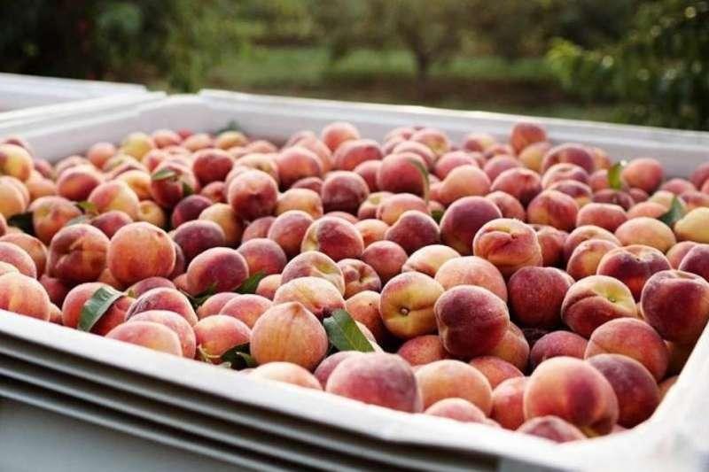 The Peach Truck不作一般水果攤商,將品牌打造成潮牌經營(圖/The Peach Truck Facebook)