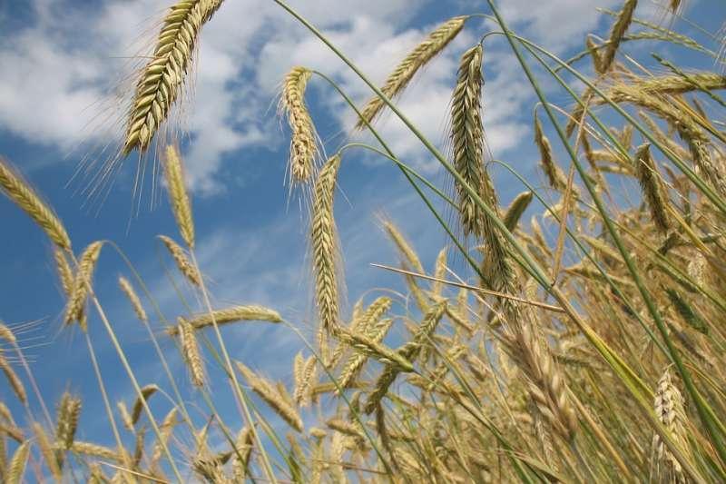 講到農業,你腦中浮現的第一個畫面是什麼?(示意圖/R0bin@pixabay)