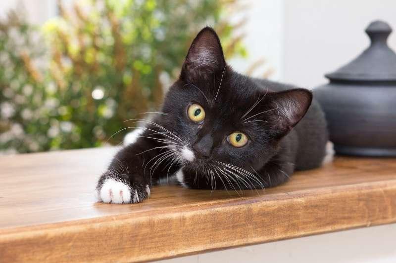 美國最新研究指出,貓咪也會對人類產生依附情感。(Pixabay)