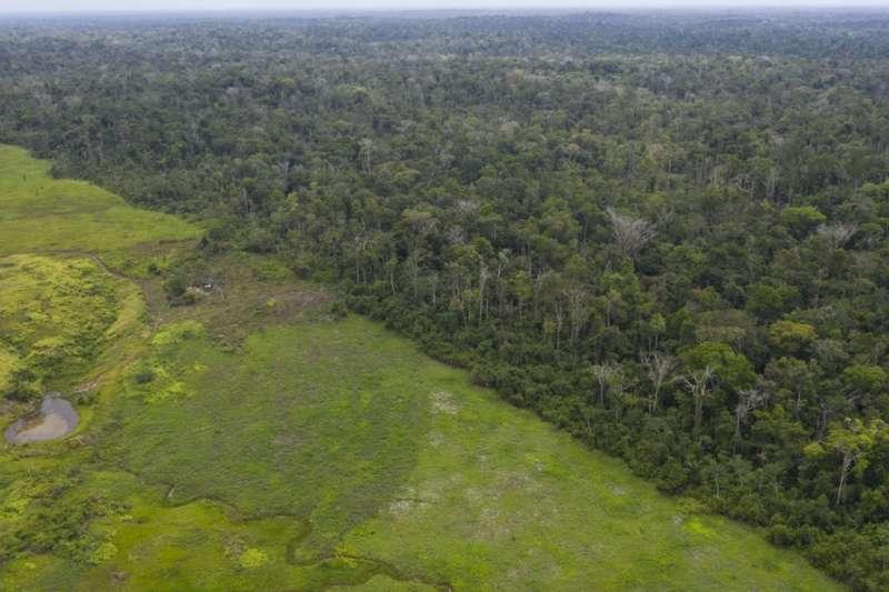 佔巴西全國土地面積達6成的亞馬遜雨林,同時孕育了全球2成的物種。(美聯社)