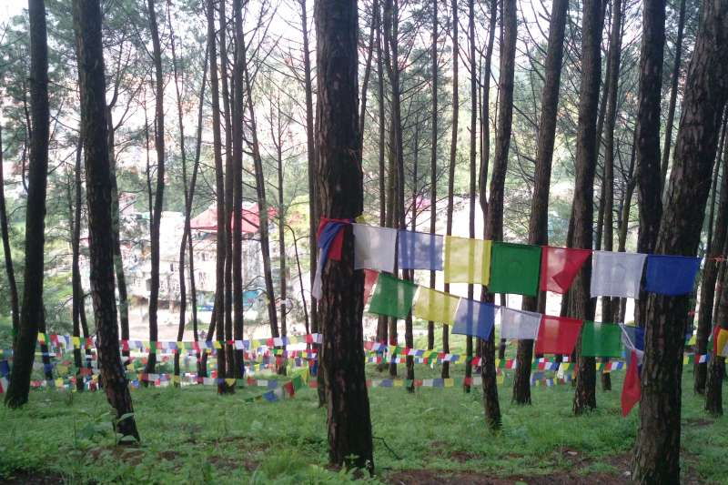 沿著菩提大道跑步上山,經過美麗的五色旗樹林。(圖/作者提供)
