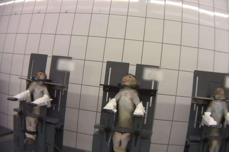 2019年10月,德國LPT動物實驗室被揭露殘酷虐待動物(YouTube)
