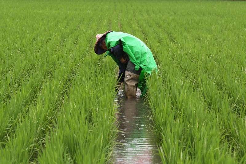 農村人口老化及外移是台灣農業的一大痛處。(圖/農委會提供)
