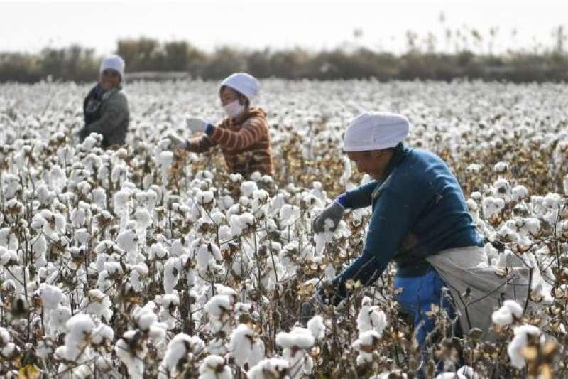 中國生產的棉花大部分來自新疆。(BBC中文網)