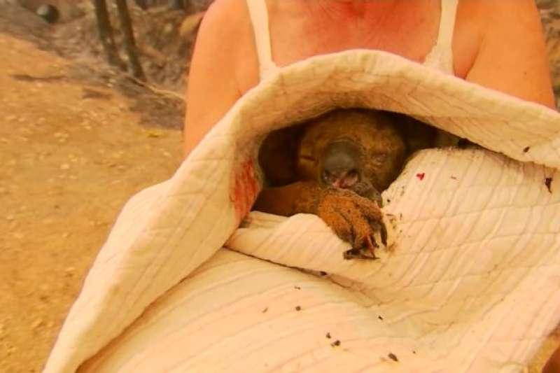 19日,新南威爾斯省一名老婦人驚險地搶救了燒傷的無尾熊。(取自You Tube)