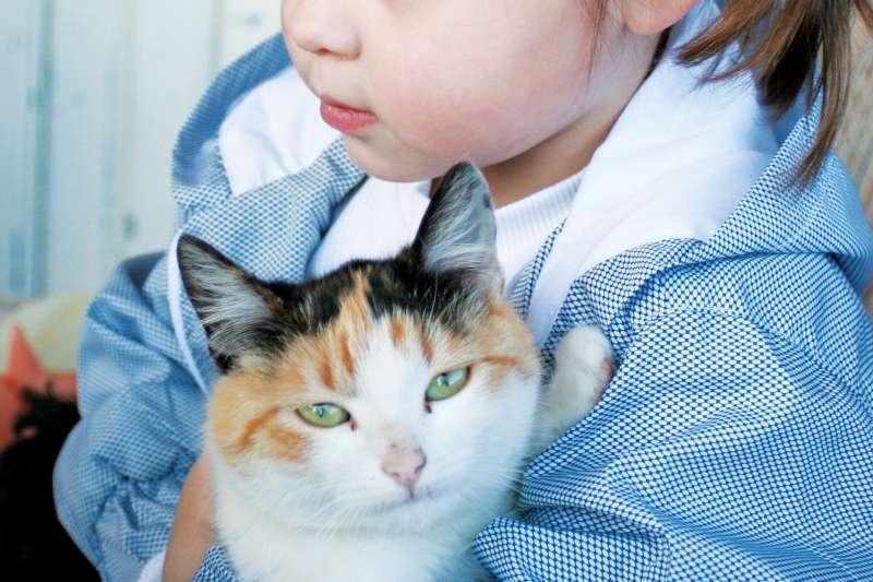 幼童時期養貓其實可降低氣喘發生率。(圖/pixabay)