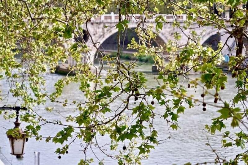 貫穿羅馬城的台伯河。(曾廣儀攝)