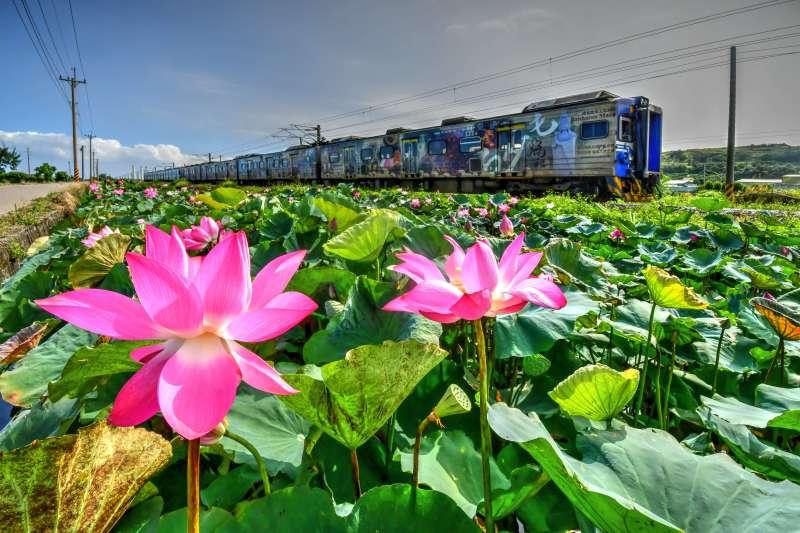 20191205-寶島照相館負責人張文煥平時就會用相機記錄在地美景,圖為荷花配火車的通霄新景點。(張文煥提供)