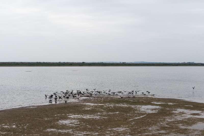 一群候鳥在洞庭湖畔嬉戲。(新華社)