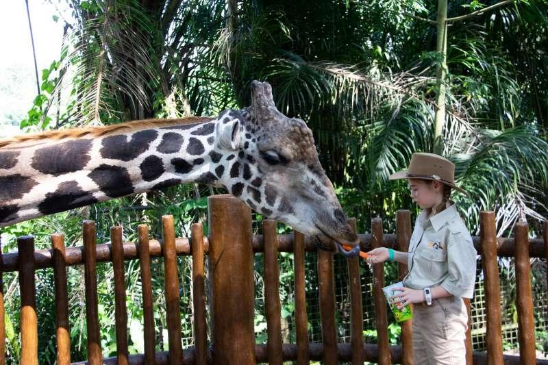 澳洲雪梨動物園開張引發討論,支持動物園的意見認為,動物園具有生命教育、環境教育及保育功能。(AP)