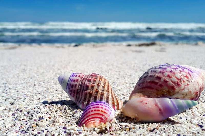 貝殼本來就屬於海洋,因為天氣、潮汐沖刷到沙灘上,當然也有機會再次回到海中,如果我們撿起來帶回家,等於判它死刑,海洋真的失去它們。(示意圖/ 00firefly00@pixabay)